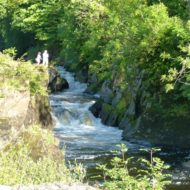 Cenarth waterfalls in August.